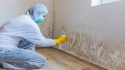 Mold Cleaning and Removal